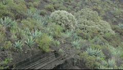 Stock Video Footage of Typical vegetation at La Caldera de Bandama in volcanic island Gran Canaria