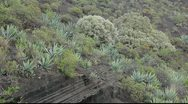 Stock Video Footage of Typical vegetation at La Caldera de Bandama in volcanic island Gran Canaria