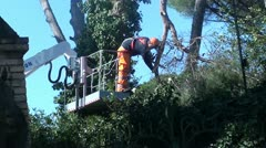 An arborist cutting a tree with a chainsaw - stock footage