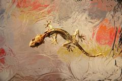 Dried lizard on glass Stock Photos
