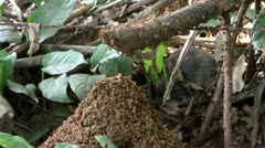 Ants Colony Building a Mound with Dirt 1 Stock Footage