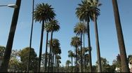 Stock Video Footage of Avenue of Palm trees