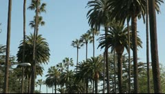 Avenue with palm trees, Santa Monica, Los Angeles, California Stock Footage