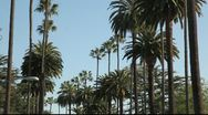 Stock Video Footage of Avenue with palm trees, Santa Monica, Los Angeles, California