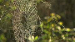 Spider web at dawn Stock Footage