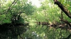 1st POV Through Mangrove Swamp Stock Footage