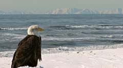 Bald Eagle Scenic Sea and Distant Mountains - stock footage