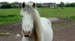 Curious white horse looking towards camera Stock Footage