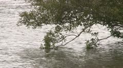 Tree overhanging river - stock footage