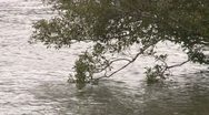 Stock Video Footage of Tree overhanging river