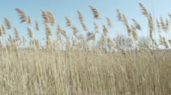 Through the Tall Grass Stock Footage