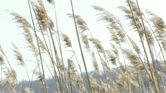 River Grass Close-up Stock Footage