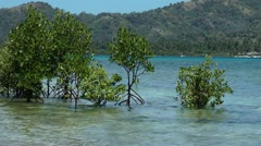 Mangrove trees on the sand island Nogas in the Philippines during hightide Stock Footage