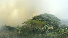 Wildfire Burning Behind a Tree Stock Footage