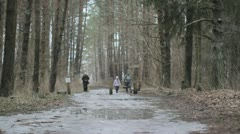 Forest path. Stock Footage