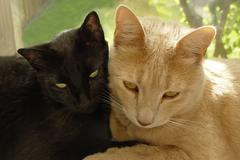 ebony & ivory - stock photo