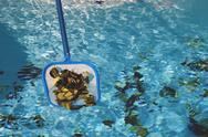 Stock Photo of scooping leaves from pool