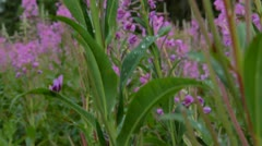 Flowers in field - moving crane shot Stock Footage