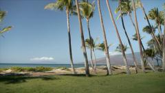 Hawaii Palm Trees & Beach, Scenic Dolly & Pan Stock Footage