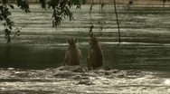 Stock Video Footage of Young Savannah Baboons on rocks on water in Niassa Reserve, Mozambique.