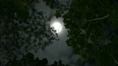 Timelapse of moon moving between trees Stock Footage