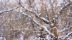 Snow falls on a tree with variable flakes & focus Stock Footage