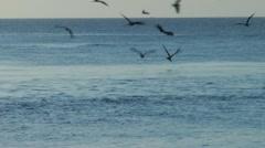 Seabirds Stock Footage
