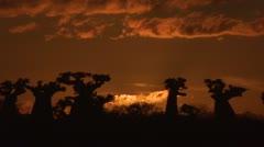 Time lapse Baobab sun rise Madagascar Stock Footage