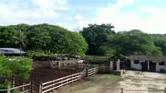 Breeding bulls Stock Footage