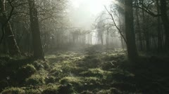 Fog mist in dutch forest imbos 02 pan 1080i Stock Footage