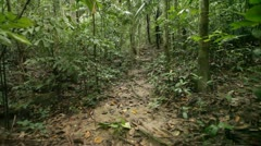 Walking in jungle - stock footage