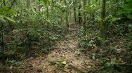 Stock Video Footage of walking in jungle