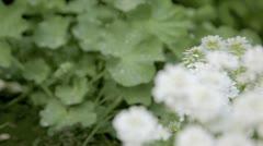 Garden flowers tracking shot Stock Footage