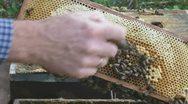 Beekeeper imker checking beehive honey bees 02 cu 1080i Stock Footage