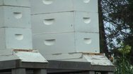 Stock Video Footage of Beehive