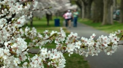 Blossoms FG, joggers soft bg, Washington Stock Footage