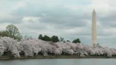 Seagulls, Cherry Trees & Washington Monument Stock Footage