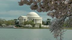 Nice light, Jefferson Memorial, swaying Cherry Blossoms Stock Footage