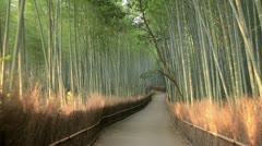 Bamboo Forest Mix in Kyoto, Japan Stock Footage