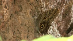 Butterfly_12 Stock Footage