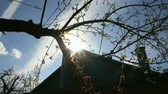 Sunshine springtime day in village garden Stock Footage