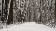 Fresh Heavy Snow on Trail in Woods Stock Footage