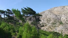 Windswept pine trees on a mountain Stock Footage