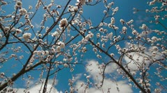 Blossoms in the sky Stock Footage