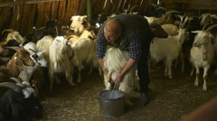 Shepherd working in farm, milking goat Stock Footage