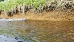 male of humpback salmon  in the bottom watercourse 3 - stock footage
