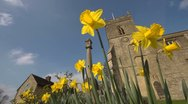 Stock Video Footage of Spring with daffodils and Church in Oxfordshire, Looking up.