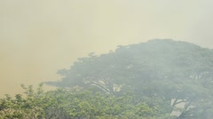Smoke from Wildfire Stock Footage