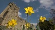 Spring with daffodils and Church in Oxfordshire, Looking up. 4 Stock Footage