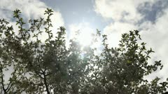 Sunbeams through skies clouds and blooming sprigs cherry-tree Stock Footage